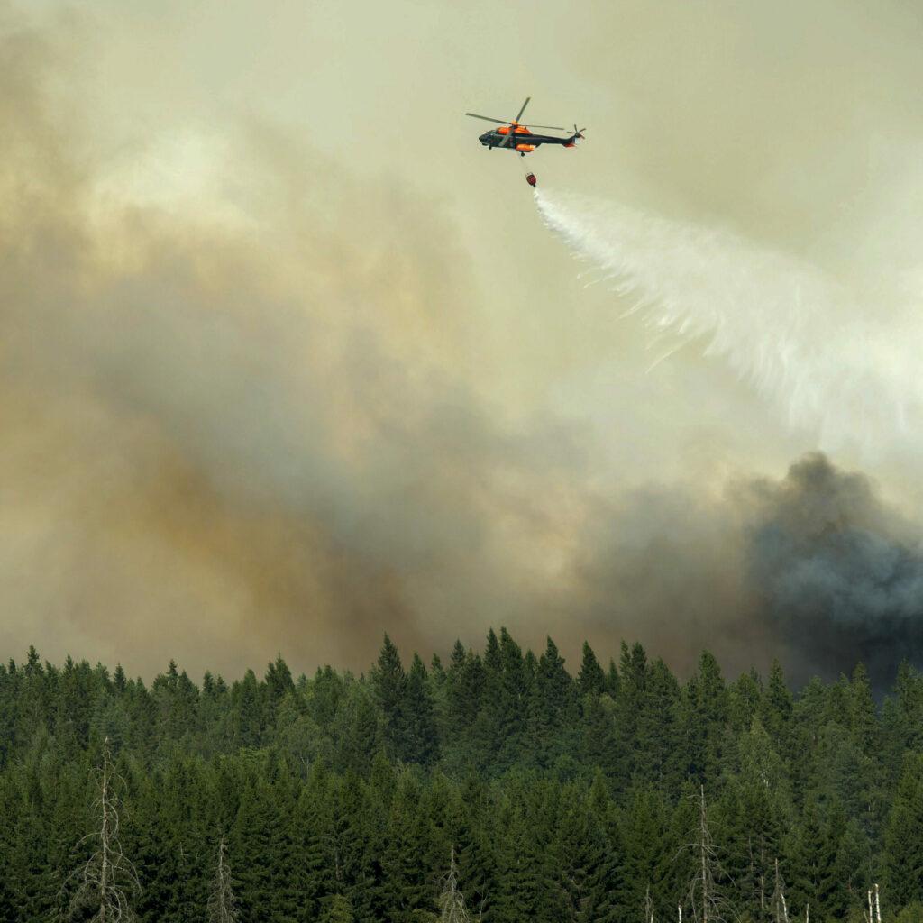 En helikopter flyger lågt över ett brinnande skogsbryn och släpper vatten över branden.
