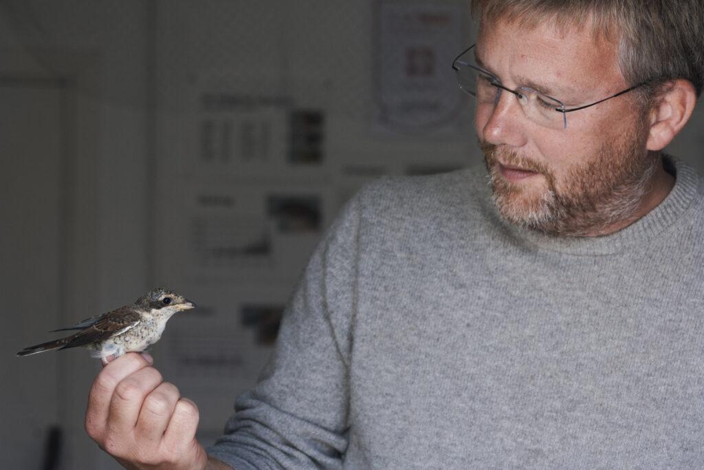 En man i grå tröja håller en småfågel i benen..